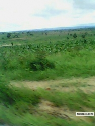 ozioma nwamuo (donzi)