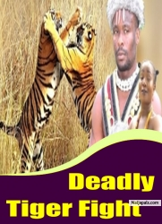 Deadly Tiger Fight