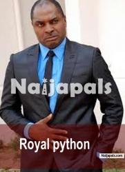 Royal Python 2