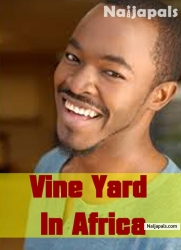 Vine Yard In Africa